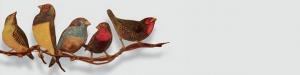 Ser pássaro: ensaio para muitos voos | Ateliers Carta Branca | Mário Afonso