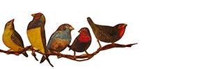 Ser pássaro, ensaio para muitos voos | Mário Afonso